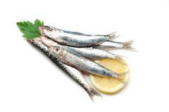 rå sardines Arkivfoto