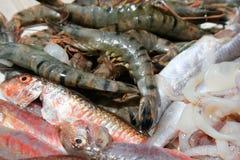 rå skaldjur Royaltyfria Bilder