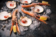 Rå skaldjur: kammusslor, langoustines, räkor och ostron arkivfoto