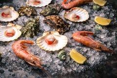 Rå skaldjur: kammusslor, langoustines, räkor och ostron fotografering för bildbyråer