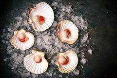 Rå skaldjur: kammusslor, langoustines, räkor och ostron arkivfoton
