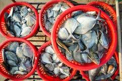Rå smörfisk i röd korg Royaltyfria Bilder