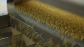 Rå spagetti flyttar på en transportör stock video