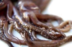 Rå tioarmad bläckfisk Royaltyfria Bilder