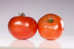 rå tomater Arkivbilder