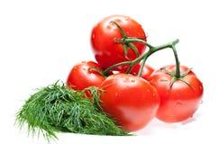 rå tomater för dill royaltyfria foton