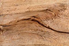 Rå trädtextur med sprickan Naturligt begrepp för modellbakgrundsyttersida royaltyfri bild