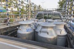 Rå transporter mjölkar i Thailand royaltyfria foton