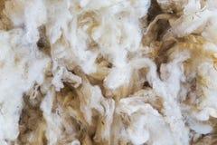 rå ull arkivfoton