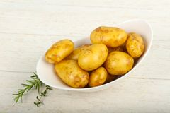 Rå ung potatis royaltyfri bild