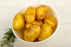 Rå ung potatis arkivbilder