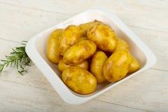 Rå ung potatis arkivfoton
