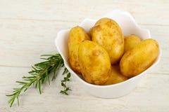 Rå ung potatis arkivfoto
