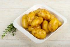 Rå ung potatis fotografering för bildbyråer