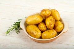 Rå ung potatis royaltyfri foto