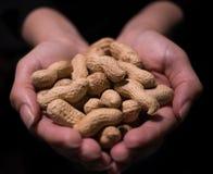 Rå unshelled jordnötter stänger sig rymt kupat i kvinnliga händer med svart bakgrund arkivbilder