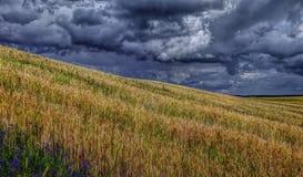 Rågfält och molnig himmel royaltyfria foton