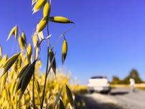 Rågnärbild, fält, jordbruk, stopp bredvid en veteåker royaltyfri bild