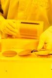 Rån som behandlar i ett gult rum Fotografering för Bildbyråer