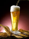Råna av öl Arkivbilder