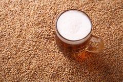 Råna av öl på malt royaltyfri foto