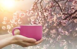 Råna av kaffe eller utslagsplats i händerna med blomningen sakura på backgro Royaltyfri Bild