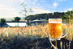 Råna av kallt öl på solnedgången arkivfoto