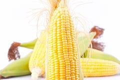 Rått öra av majs på majskolvkärnor eller korn av mogen havre på vita den isolerade bakgrundsmajsgrönsaken Royaltyfri Foto