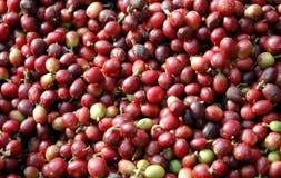 rått bönakaffe Royaltyfri Fotografi