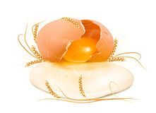 Rått brutet ägg i skalet med vete Arkivbilder
