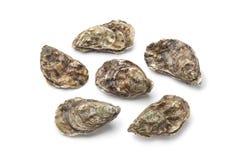 rått helt för nya ostroner Royaltyfri Fotografi