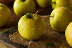 Rått organiskt guld- - läckra äpplen arkivfoto