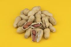 rått skal för jordnötter Arkivfoto