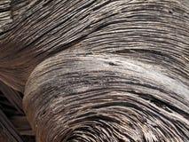 rått trä Royaltyfri Fotografi