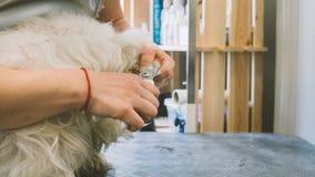 Règlage de clou chez les chiens Entretenez le salon de toilettage pour des chiens Chiens de soin d'ongle Orientation peu profonde Photographie stock