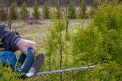 Règlage de haie, travaux dans un jardin Photos stock