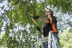 Règlage Limbf outre d'un arbre Images stock