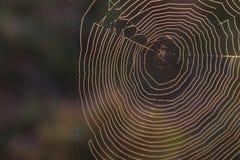 Règle de macro photo de tiers de contexte texturisé de toile d'araignée Images libres de droits