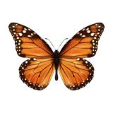 Réaliste de papillon d'isolement Images libres de droits