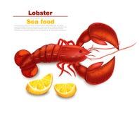 Réaliste de vecteur de homard d'isolement Illustrations détaillées fraîches des fruits de mer 3d illustration libre de droits