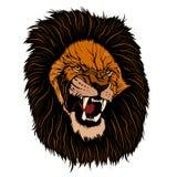Réaliste fâché de visage rouge de lion Photo libre de droits