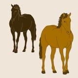 Réaliste réglé de silhouette de cheval Photographie stock