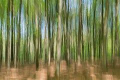 Réalité invisible : Vue brouillée de jeunes arbres de hêtre au printemps