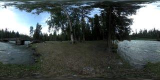 Réalité virtuelle de 360 VR d'une forêt sauvage de pin de forêt, petite rivière rapide et froide de montagne Stationnement nation clips vidéos