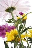 Réception de fleur Photographie stock