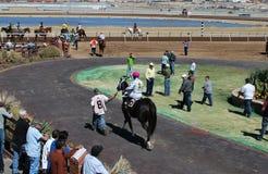 Réchauffage de course de chevaux Photographie stock