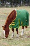 Réchauffeur de couverture de cheval Images libres de droits