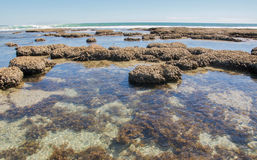Récif bleu de plage de trous Images stock