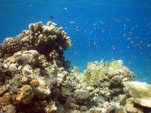 Récif coralien Images stock