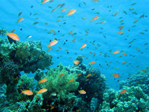 Récif coralien images libres de droits